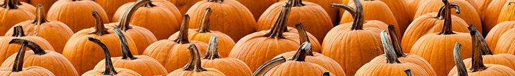pumpkin-patch-credit-pixeldarkroom-via-shutterstock-com-1200px